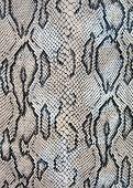 Snake texture concept, dangerous macro, stress concept.