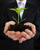 Businessman Holding Sapling Representing Growth