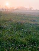 Sunrise Meadow