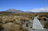 Tongariro Trail In New Zealand.