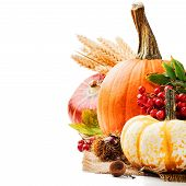 Autumn Setting With Various Pumpkins