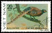 Vintage  Postage Stamp. Bird Colhicus.