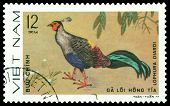 Vintage  Postage Stamp. Bird Lophura Diardi.