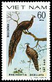 Vintage  Postage Stamp. Bird Pheinartia Ocellata.