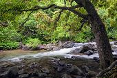 Stream in the Iao Valley State Park, Maui, Hawaii