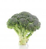 Beautiful ripe broccoli.