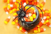 Black Spider On A Pot Of Candy Corn