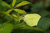 Wild Green Butterfly On Leaf