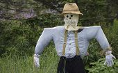 stock photo of scarecrow  - A rustic homemade scarecrow stands against a background of green foliage - JPG