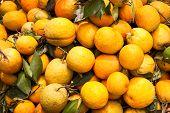 Orange Dirty Unwashed