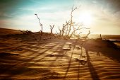 Desert Landscape With Dead Plants In Sand Dunes Under Sunny Sky. Global Warming Concept