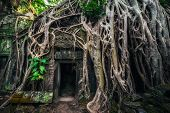Ta Prohm Temple With Giant Banyan Tree. Angkor Wat, Siem Reap, Cambodia