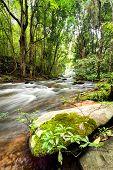 Tropical Rainforest Landscape With Flowing River, Rocks And Jungle Plants