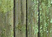 Grunge paint wall background. Texture