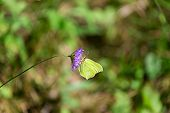 Beautiful Butterfly In The Forest