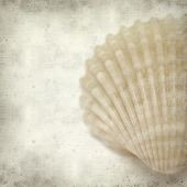 Textured Old Paper Background With Shell