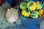 Bucket Full Of Pumpkins