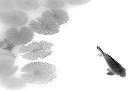 stock photo of koi fish  - koi  - JPG