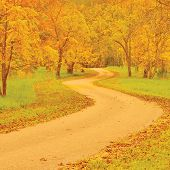 Walnut Trees And Footpath In Autumn, Colorful Yellow, Red Leaves, Large Detailed Outdoor Scene