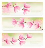 stock photo of japanese magnolia  - Three Spring banners with blossom brunch of pink flowers - JPG
