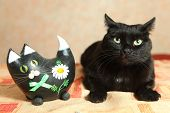 Two Black Cat Toy Cat And Real Cat On The Table