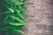 Fresh Green Fern Leaves. Nature Background