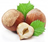 picture of cobnuts  - Hazelnuts with leaves isolated on a white background - JPG