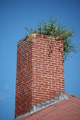 Old chimney with weeds growing out of it