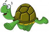 pic of terrapin turtle  - Happy turtle walking - JPG