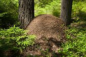 The Big Ant Hill