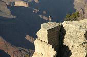 Grand Canyon Ram