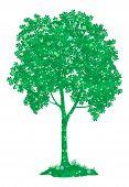 Chestnut tree. Vector