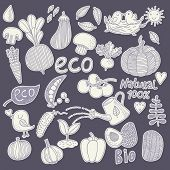 Fantastic eco food concept set in vector. Tasty mushrooms, vegetables and fruits in one eco concept vector