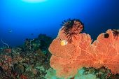 Large Sea Fan On A Coral Reef