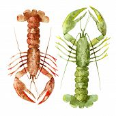 stock photo of lobster  - Beautiful watercolor vector set with red and green lobsters - JPG