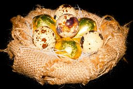picture of homogeneous  - quail eggs in an artificial nest of natural burlap on a homogeneous background - JPG