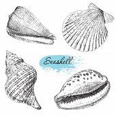 foto of scallop shell  - Beauty set of various sea shells vector - JPG