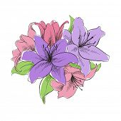 pic of lillies  - floral illustration of lilly flowers - JPG