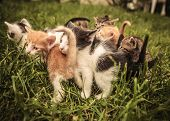 picture of baby cat  - many baby cats standing and playing in the grass - JPG