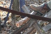 crosscut saw cutting log