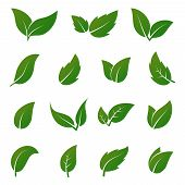 Green Leaf Vector Icons. Spring Leaves Ecology Symbols. Green Leaf And Spring Nature Organic Illustr poster