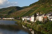 Town Zell At Mosel River, Germany