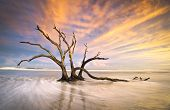 Folly Beach Dead Tree Driftwood Ocean Sunset Charleston Sc Landscape
