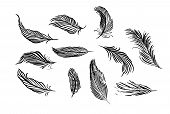 Collection Of Hand Drawn Feather. Isolated On White Background. Set Of Decorative Animals Birds Feat poster