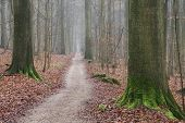 The forest of our fairy tales
