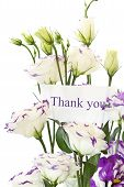 stock photo of thank you card  - beautiful white flowers on a white background - JPG