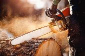 Chainsaw. Chainsaw In Move Cutting Wood. Man Cutting Wood With Saw. Dust And Movements. poster