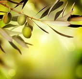 Olive entwerfen.Essen background