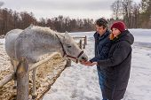 Teen Girl And Middle Aged Man Feeding Horse At Ranch In Snowy Day. Father And Daughter At Countrysid poster