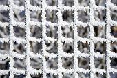 Snowy Fence